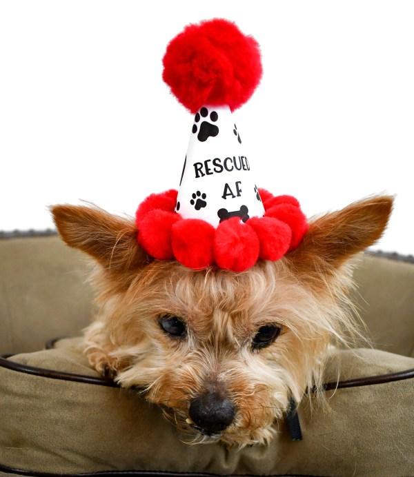 Rescued AF Dog Adoption Party Hat