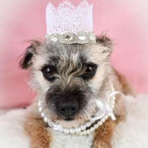 Dog Wedding Crown