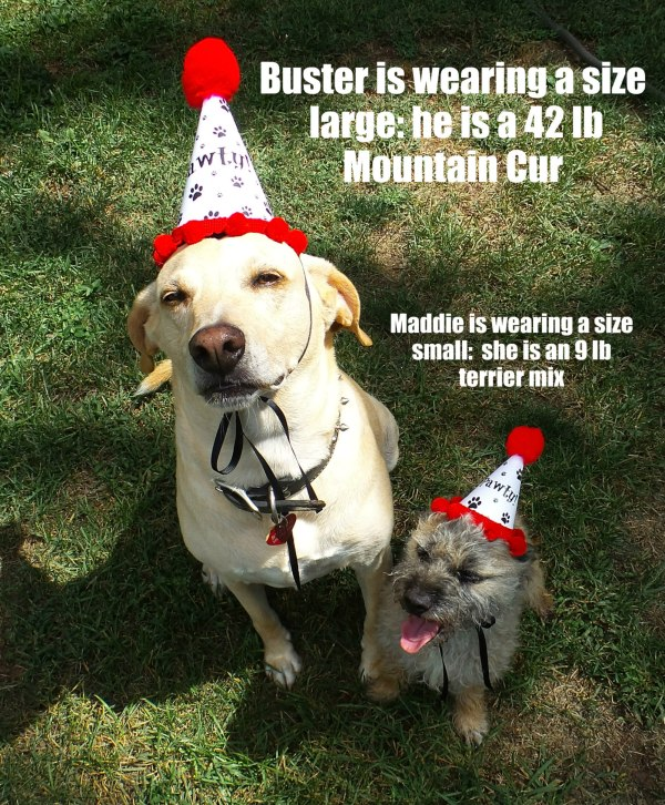 Dog Party Hats, Dog Birthday Hats, Paw Print Party Favors