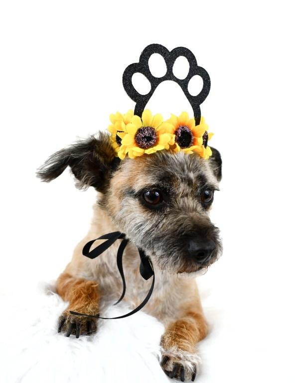 Dog Crown, Dog Birthday Hat, Barkday Hat, Dog Party Crown, Misfit Manor Shop