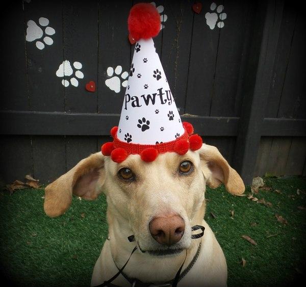 Dog Birthday Hat, Puppy Birthday, Paw Print Party Favors, Misfit Manor Shop