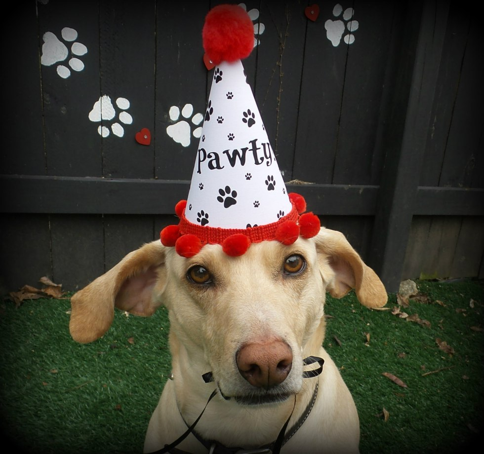 Dog Birthday Hat, Puppy Birthday, Paw Print Party Favors, Misfit Manor Shop