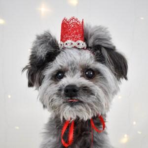 Dog Birthday Crown, Photography Prop, Dog Wedding Attire
