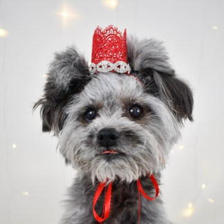 Dog Birthday Crown, Photography Prop, Dog Wedding Attire