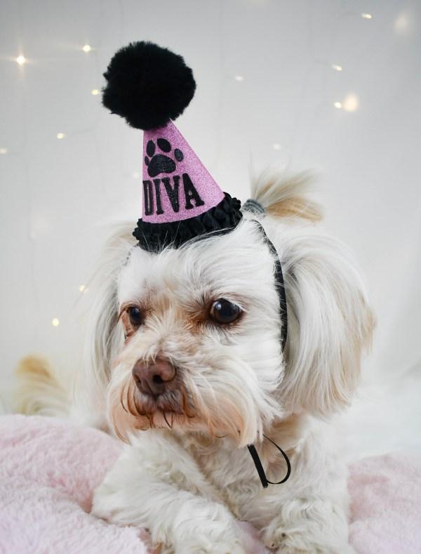 Pink Dog Birthday Hat, The Misfit Manor Shop