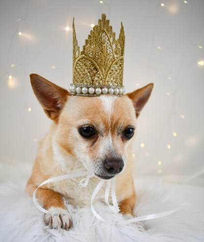 The Golden Divine Dog Crown, The Misfit Manor Shop