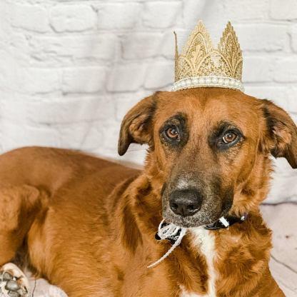 Dog Birthday Crown