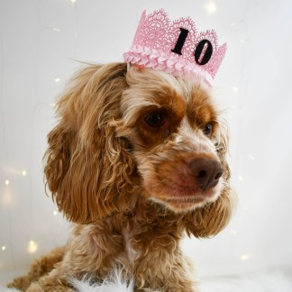 Pink Dog Birthday Hat