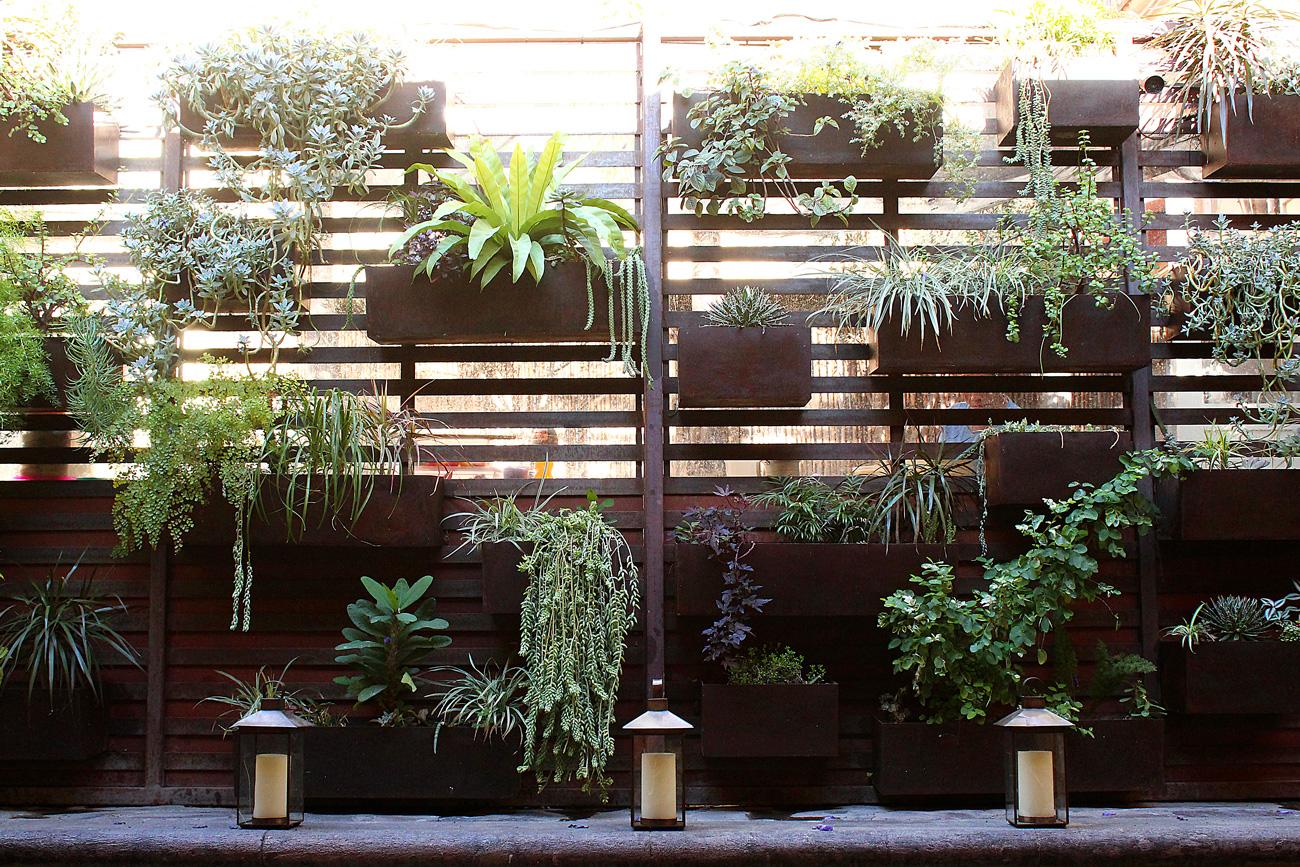 Plants-wall