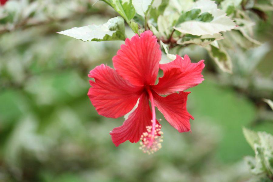 Flowers in Buja