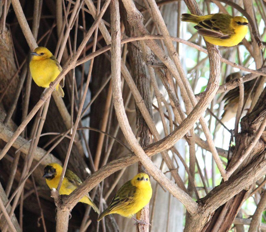 Birds in Kasese