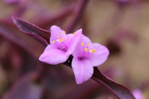 Rwandan flowers