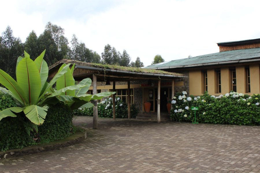 Mountain View Gorilla Lodge