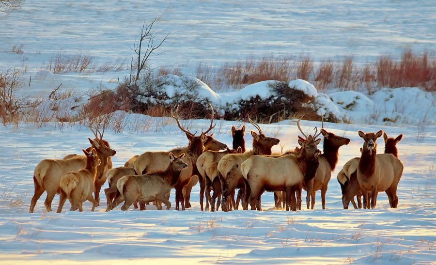 Elk on our Redstone to Gunnison drive