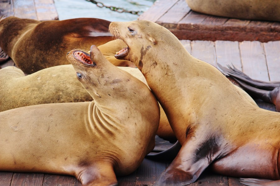 Exploring San Francisco's waterfront - sea lions!
