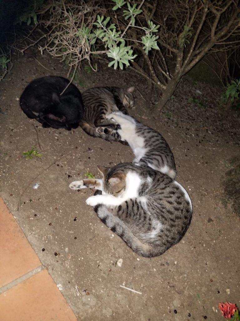 Cat pile!