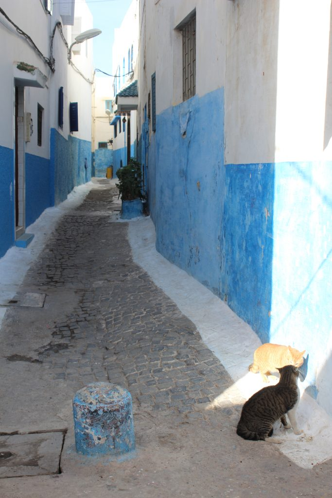 A literal catfight unfolding in Rabat