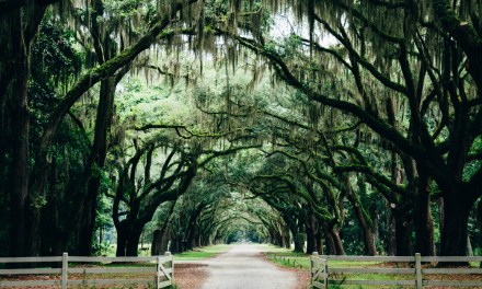 Reflections from My Plantation Visit