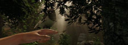 The Forest - Bird