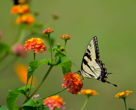 bloom-blossom-butterfly-158617