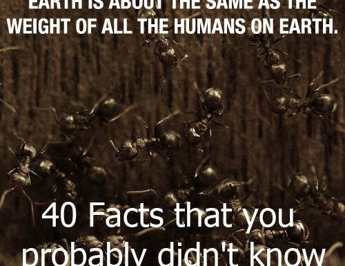 40 facts