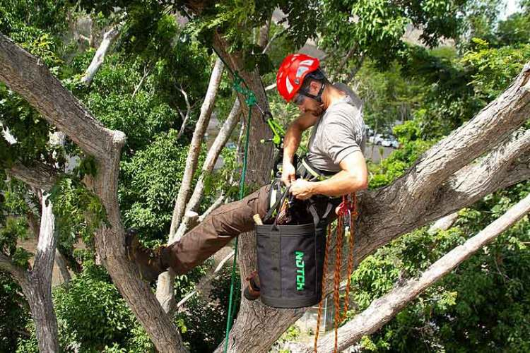 What Is Arborist And What Are His Responsibilities?