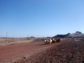 Local traffic, Hormuz island