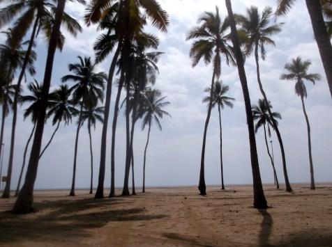 Warning falling coconuts, Salalah