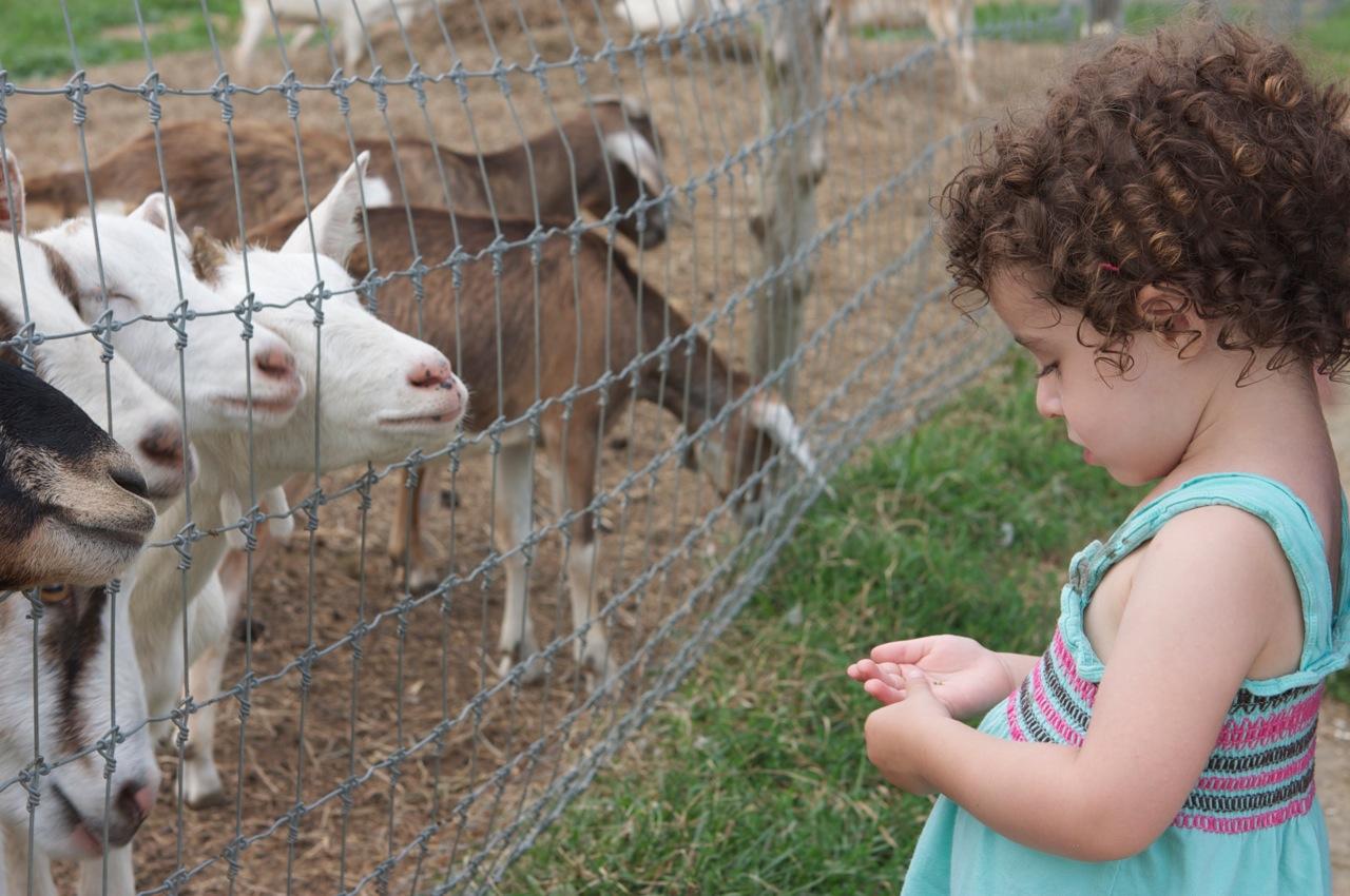 Simmons Farm Petting Zoo