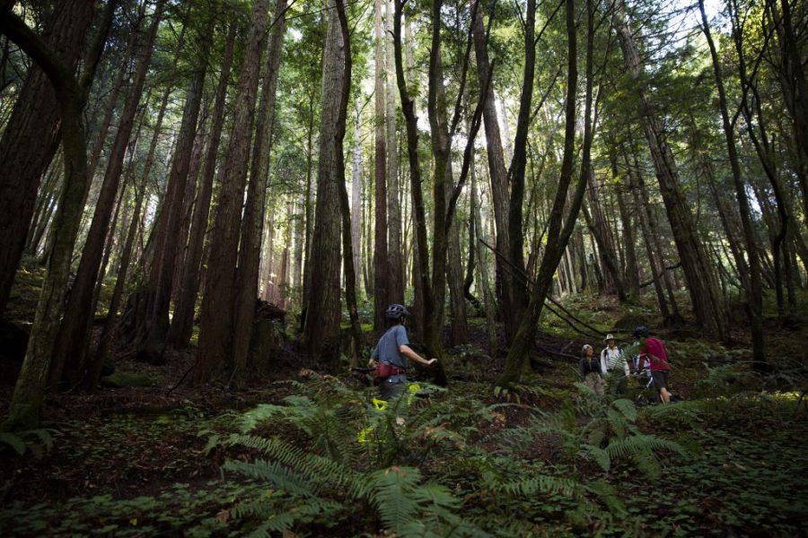 Redwood Nirvana