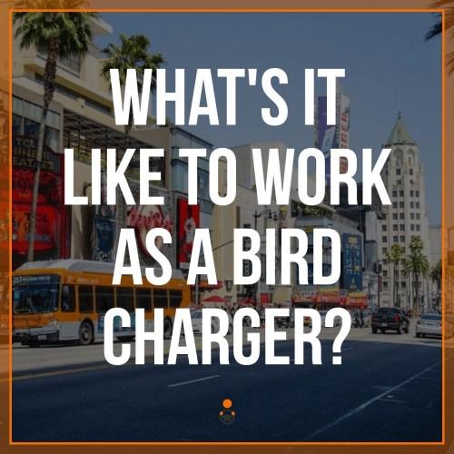 Bird Charger
