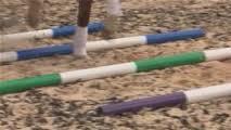 trot poles