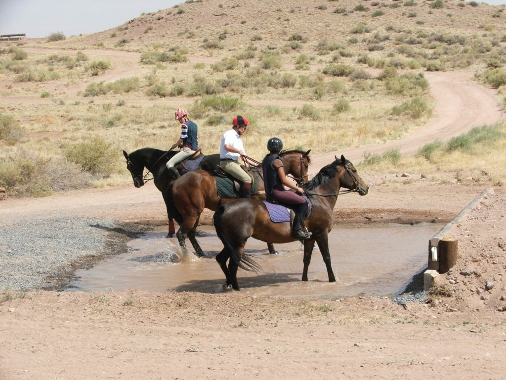 Managing the Summer Heat with Your Horseback Students
