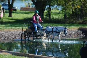 from the perspective of the horse driving through water is dumb