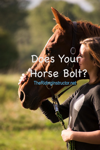 Turnout: Does Your Horse Bolt Out of the Halter?