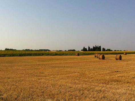 Ploughed wheat field
