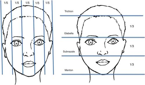 Face Proportions Analysis