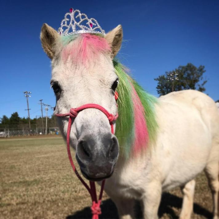 mini white horse with princess crown and colored hair