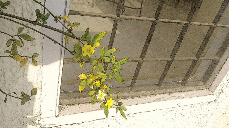 The Picture of a Yellow Willow
