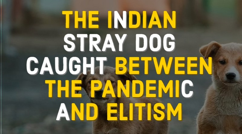 THE INDIAN STRAY DOG CAUGHT BETWEEN THE PANDEMIC AND ELITISM