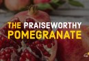The Praiseworthy Pomegranate