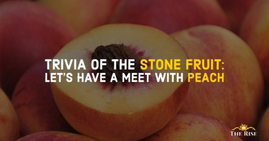 TRIVIA OF THE STONE FRUIT