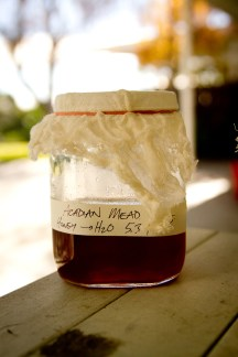 Acadian Mead -- 5:1 Honey:Water!