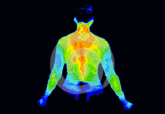 upper body thermography scan image
