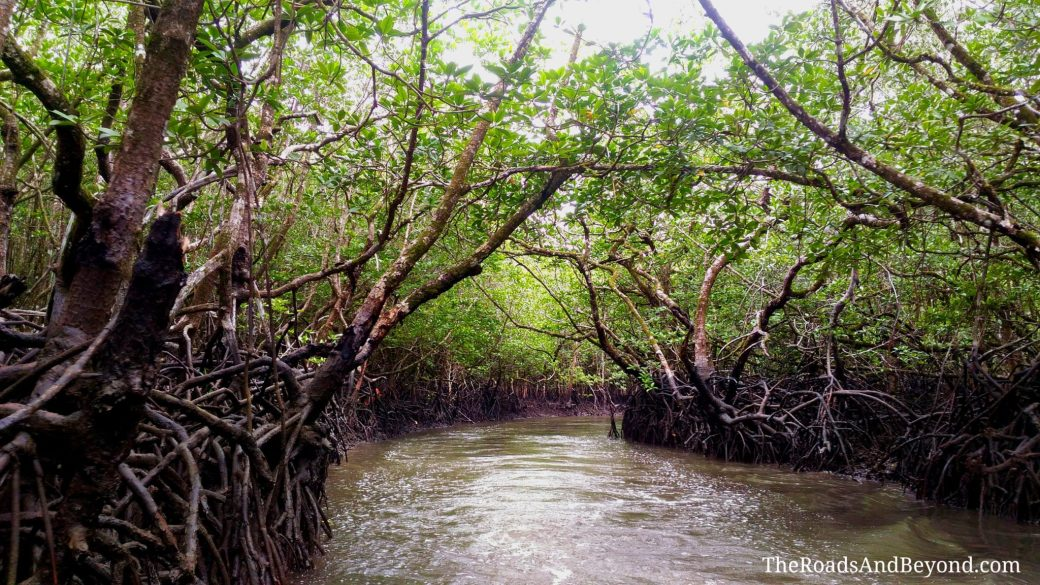 Andaman mangrove forest image
