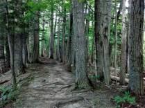 rim_trail_trees