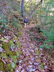 overlook_trail_leaves