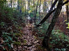 overlook_trail_leaves_2