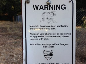 Mountain lion alert
