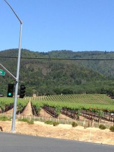 Our neighborhood in Sonoma Valley